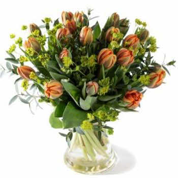 Royal orange tulips